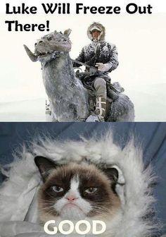 grumpy cat star wars luke skywalker han solo humor funny