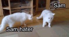 (gif) Sam hater vs Dean, in cute animal format