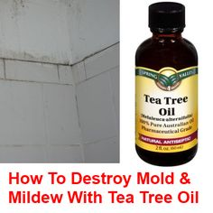 How to Destroy Mold & Mildew with Tea Tree Oil