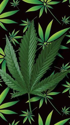 Here is a tip for happier and longer life; use medical marijuana for pain… Weed Wallpaper, Galaxy Wallpaper, Black Wallpaper, Nature Wallpaper, Weed Backgrounds, Wallpaper Backgrounds, Marijuana Art, Medical Marijuana, Dope Wallpapers
