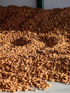 Spanish almonds laid out drying before being shelled - salted almonds and serrano ham, perfect tapas combo! Bulk Nuts, Serrano Ham, Shelled, Roasted Almonds, Stuffed Shells, Chorizo, Coffee Beans, Dog Food Recipes, Tapas