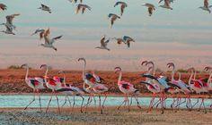 Dafna-Tal_EILAT-REGION-bird-migration  13.-Dafna-Tal_EILAT-REGION-bird-migration.jpg (2400×1429)