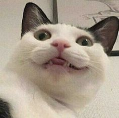Funny Cat Faces, Funny Cats, Funny Animals, Cute Animals, Cute Kittens, Cats And Kittens, Derpy Cats, Ugly Cat, Cute Cat Memes