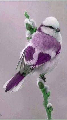 Make one special photo charms for your pets, 100% compatible with your Pandora bracelets.  Alguien sabe el tipo de ave que es esto, me gustaría saber! Por favor ayuda