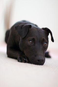 My very gorgeous patterdale terrier Gunner xxx