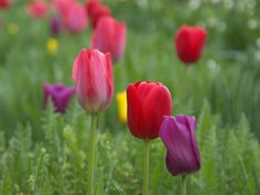 beatiful flowers | images of most beautiful blooming flowers pictures and flowers10 all ...