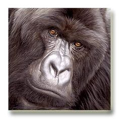 Wildlife art paintings & prints
