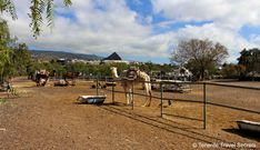 Camel Park Tenerife - have an unique experience with these enjoyable animals
