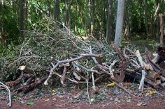 brush pile as building material storage