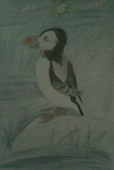 luonto piirustus kuvia: Värikäs nokka lintu lunni olemme lintuja