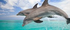 Key West, Florida... dolphin encounter (swim with dolphins) and dolphin tours (go follow pods out in the ocean) <3!