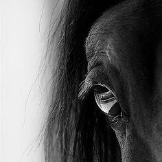 Beautiful close up s