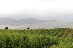 The Overberg region boasts with an awesome collection of wine farms - and you can have an adventure by going on the different wine routes in the area. The Hermanus Wine Route R320 starts in Sandbaai and takes thirsty travellers into the breath taking Hemel en Aaarde (Heaven and Earth) Valley.