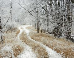 The Road Less Traveled 2nd place - Frosty Trail 2 by Penny Meyers - Fine Art America