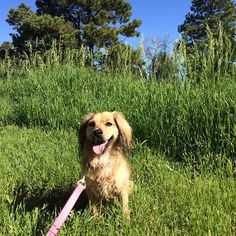 Are you following Modern Mongrel on Facebook? #dog #nature #cute