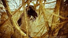 #raven #tallinn #travel #landscape #photography
