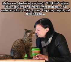 Cat Cafe In Melbourne - that's a great idea to get homes for the cats - having them around my eating area...not so much - rubbing noses with them...definitely not!