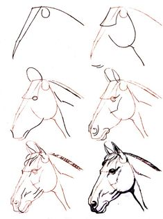Learn to draw step by step: animal - horse head (side view) - . - Joyeux - Learn to draw step by step: animal – horse head (side view) – … - Horse Head Drawing, Horse Drawings, Pencil Art Drawings, Art Drawings Sketches, Realistic Drawings, Easy Drawings, Animal Drawings, Tattoo Sketch Art, Horse Sketch