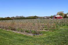 Tendercrop Farms: Newbury, Mass