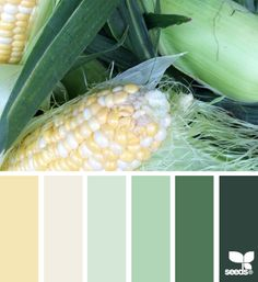 husked hues