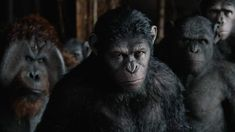 Dawn Of The Planet Of The Ape - Official International Trailer growing nation of genetically evolved apes led by Caesar is threatened by a band of human survivors of the devastating virus unl Dawn Of The Planet, Planet Of The Apes, Matt Reeves, Kid Movies, Movies 2014, 2 Movie, Watch Movies, Primates, Classic Films