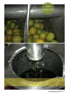 Close view of fresh bergamot and bergamot oil in the Bergamot Issue.