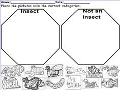 insect sort insects science experiments for preschoolers second grade science bugs insects. Black Bedroom Furniture Sets. Home Design Ideas