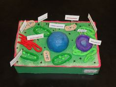 3d Animal Cell Project Ideas Image Search Results cakepins.com