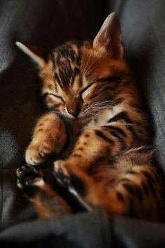 Sleeping kitten <3