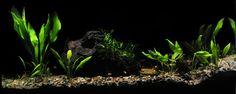 Montage aquarium | von jp_1726