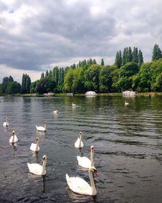 Kingston upon Thames Kingston Upon Thames, Surrey, London, Animals, Animales, Animaux, Animal, Animais, London England