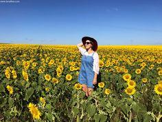 Um destes campos ficava no caminho para a chácara da minha mãe, localizado entre os municípios de Vianópolis e Orizona. Eu ainda estava na Califórnia, quando minha mãe me mandou mensagem avisando do campo florido no caminho para a chácara. Então assim que cheguei de viagem fui passar um final de semana na chácara e aproveitei para tirar foto no campo de girassóis, pois a flor não fica muito tempo em pé, e logo começa a murchar. Hot Park, Sunflower Field Photography, Sunflower Fields, Book Fandoms, Look, Heaven, Seasons, Drawings, Tumbler