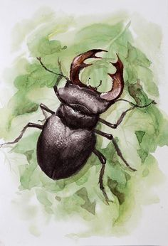 Stag Beetle watercolor Beetle Totem Animal Wall Art insect