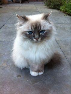 Beautiful little grumpy face