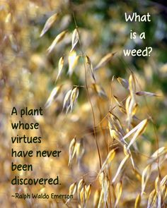 Nature quote about weeds by Ralph Waldo Emerson