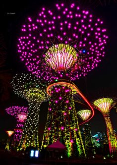 Supertrees - Solar Powered Trees - Garden By The Bay - Singapore