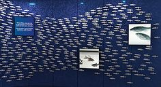 Zebrafish Interactive Donor Wall at Dana Farber Cancer Institute.