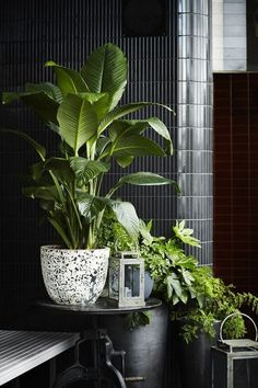 Indoor plants design makes your living space more comfortable, breathable, and luxurious. See these 30 ideas on how to display houseplants for inspiration. Best Indoor Plants, Outdoor Plants, Green Plants, Tropical Plants, Potted Plants, Decoration Of Living Room, Bedroom Plants, Bedroom Wall, Bedroom Decor