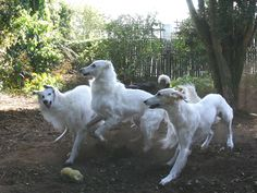 Playing with friends Animals And Pets, Baby Animals, Cute Animals, Borzoi Dog, Animal Photography, Animals Beautiful, Best Dogs, Dog Breeds, Dogs And Puppies
