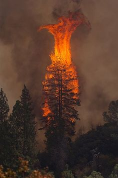 Forrest fire -- so sad!