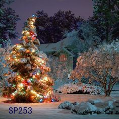 What a beautiful Christmas tree nestled between the snow covered trees and background. Love this outdoor Christmas tree scene and Christmas winter wonderland garden! Christmas Scenes, Noel Christmas, Christmas Images, Outdoor Christmas, Winter Christmas, Christmas Lights, Christmas Morning, Christmas Chords, Christmas Feeling