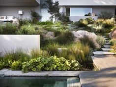 Low maintenance garden with grasses.