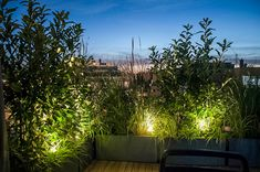 Impressions - Pflanzplan Rooftop Garden, Planer, Outdoor, House, Paradise, Friends, City, Outdoors, Outdoor Games