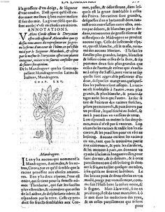 Mandragora, 1559, Pedanius Dioscorides,  Les VI livres de Ped. Diosc. de la materie medicinale, Lyon France, Bayerische Staatsbibliothek, 4 A.gr.b. 609 S. 397 [Mandragore]