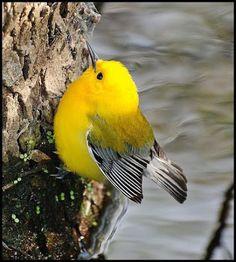 I love, this bird..