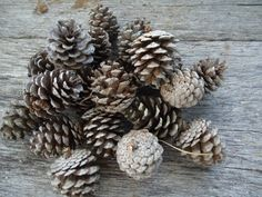 75 small pine cones for crafts, wedding decorations, hobby, Christmas ornaments. $13.95, via Etsy.
