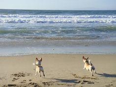 sealaura: dogs on the beach