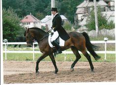 Первое выступление на 4-х летней лошади. 44 езда, 63%. На уздечке, без шпор. 3-е место.