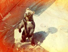 Nick Meek on levineleavitt.com #photography #animals #bear