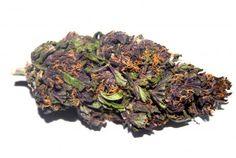 Purple Haze-578x387